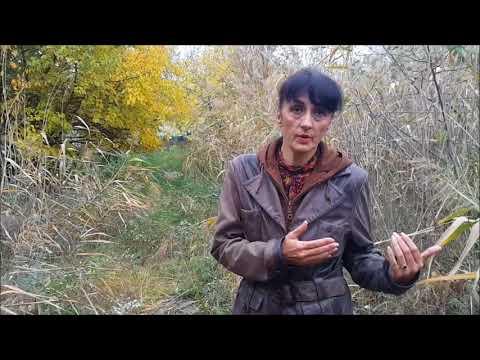 Snježana Mitrović Da li se mogu približiti stavovi građana i struke