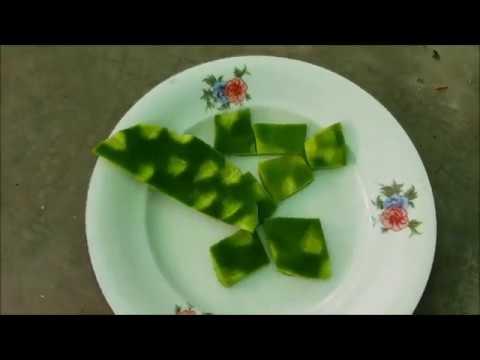 Gabika o jestivom kaktusu Opuntija