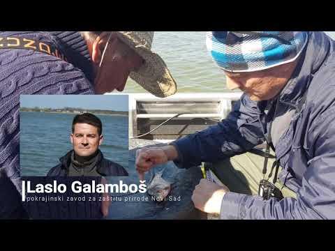 Laslo Galamboš o nađenoj možda novoj vrsti ribe