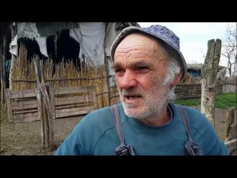 Antunović Mihajlo Da se javi neko ko je video prikolicu sa desetak ovaca
