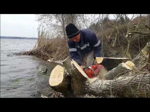Tanja Jotanović o početku radova na zaštitnom pojasu jezera Palić