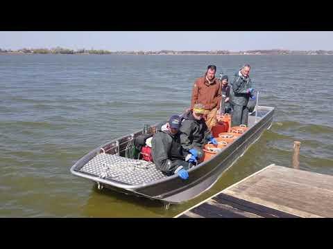 Kapitalni primerak štuke u jezeru Palić